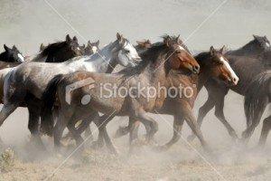 ist2_6637722-horses-running