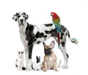 Animal group